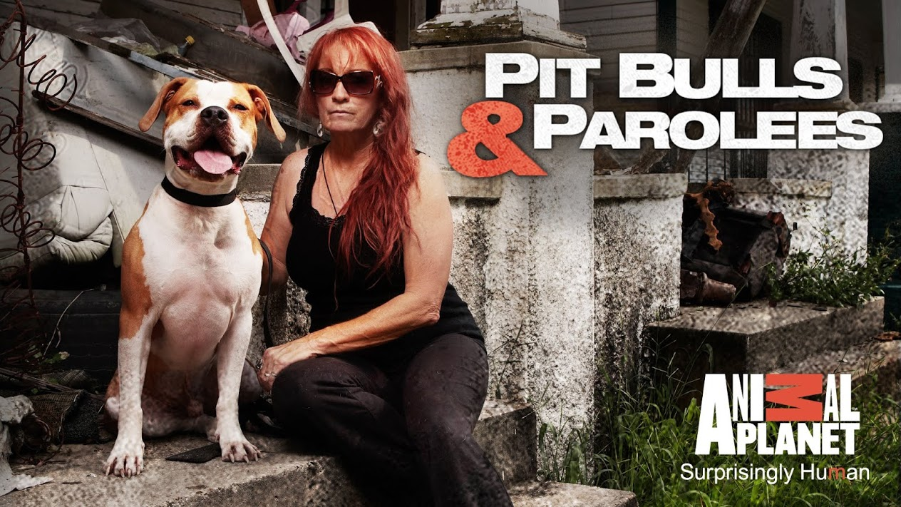 Pit bull and parolees